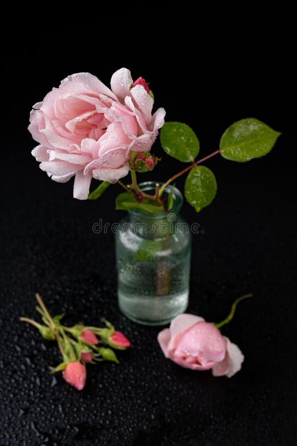 Rosa hermosa en un florero de cristal Flor hermosa del jardín en una tabla oscura fotografía de archivo