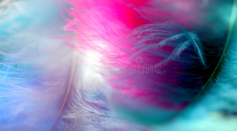 Rosa hermoso y extracto en colores pastel azul de la foto fotografía de archivo