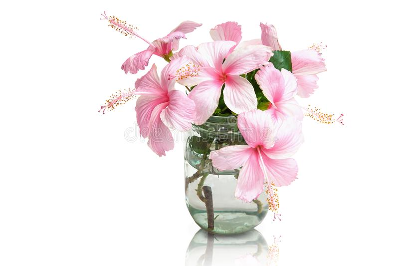 Rosa Hibiscus-Blumen im Glasvase stockfotografie