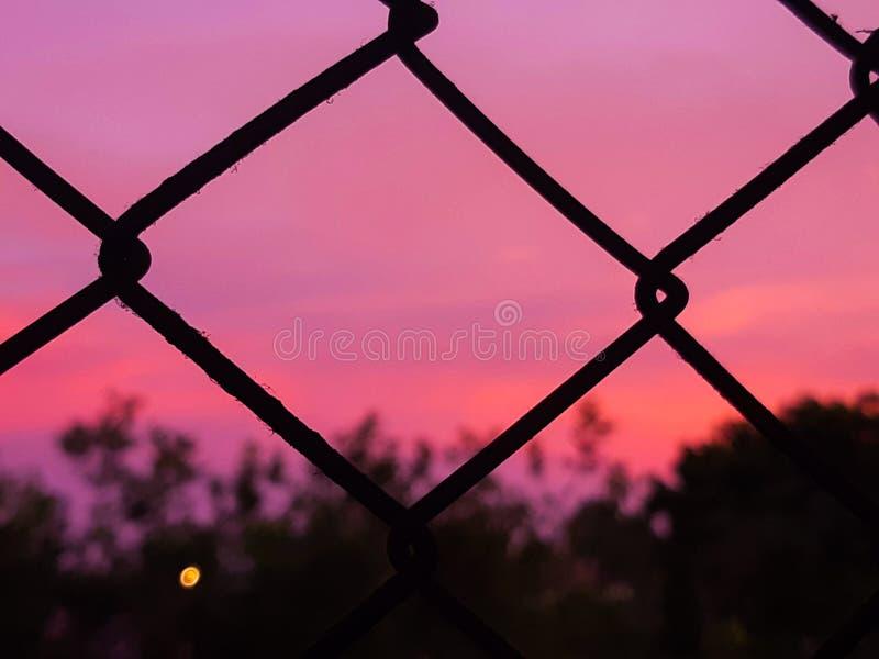 Rosa himmel som min hjärta royaltyfri foto