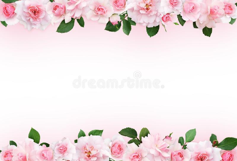 Rosa Hintergrund mit rosafarbenen Blumen und Blättern stock abbildung