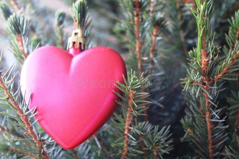 Rosa hjärta på julgranen royaltyfri foto