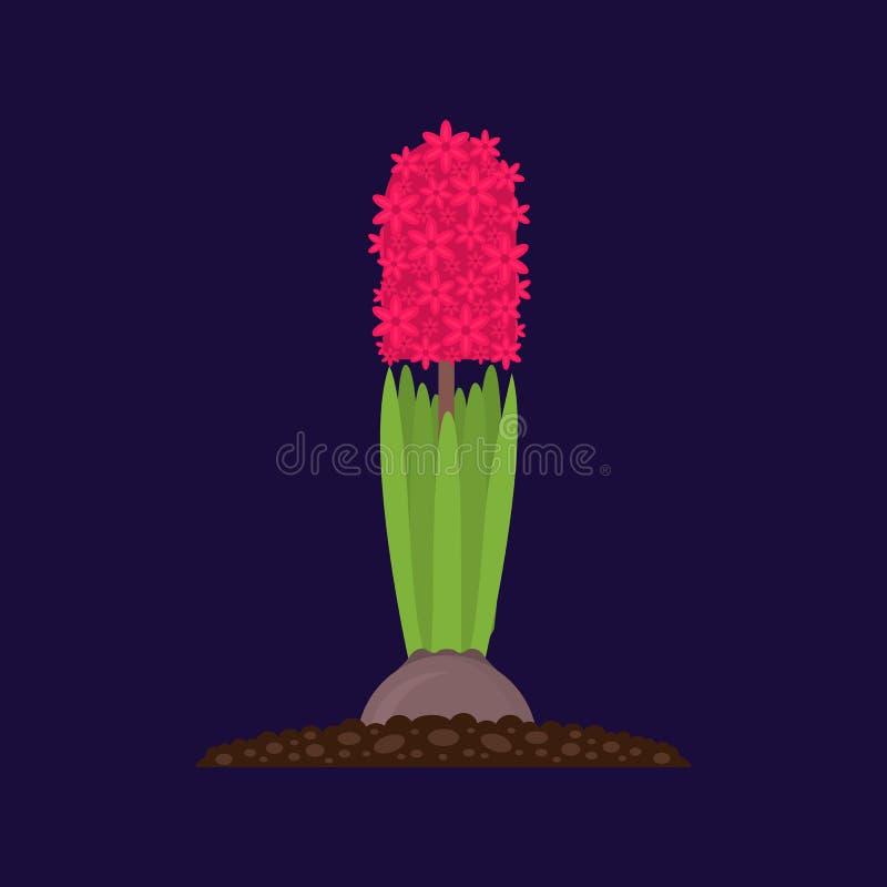 Rosa Hyacinth Growth da planta da cor dos desenhos animados Vetor ilustração stock