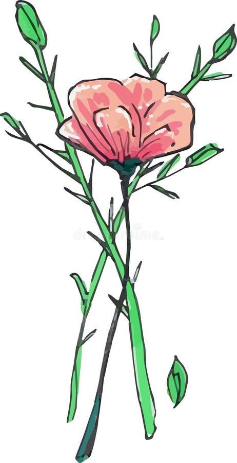 Rosa illustration för ros- och rosmarinörtvektor royaltyfria bilder