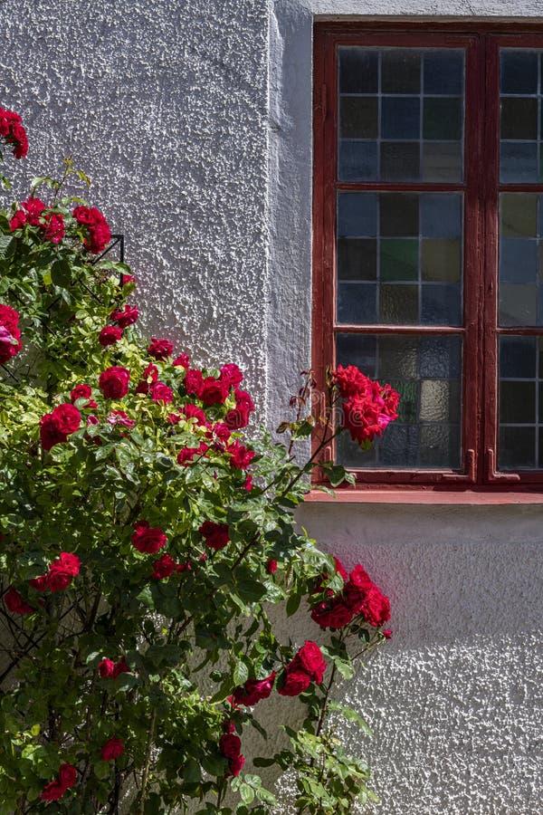 Rosa inramat fönster i Visby, Gotland, Sverige royaltyfria bilder