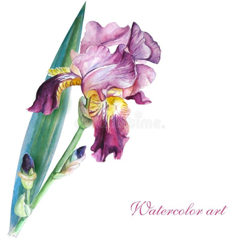 Rosa irisvattenfärg vektor illustrationer