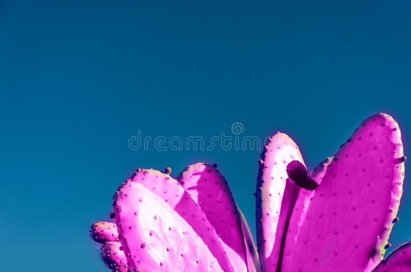 Rosa Kaktushintergrund stockfoto