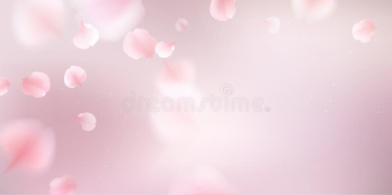 Rosa Kirschblüte-Abfall der Blumenblätter zum Boden vektor abbildung