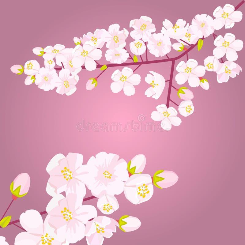 Rosa Kirschblüte auf Niederlassung mit der Knospe oder den Trieb Leeres copyspace mit Blumengrenze Auch im corel abgehobenen Betr stock abbildung