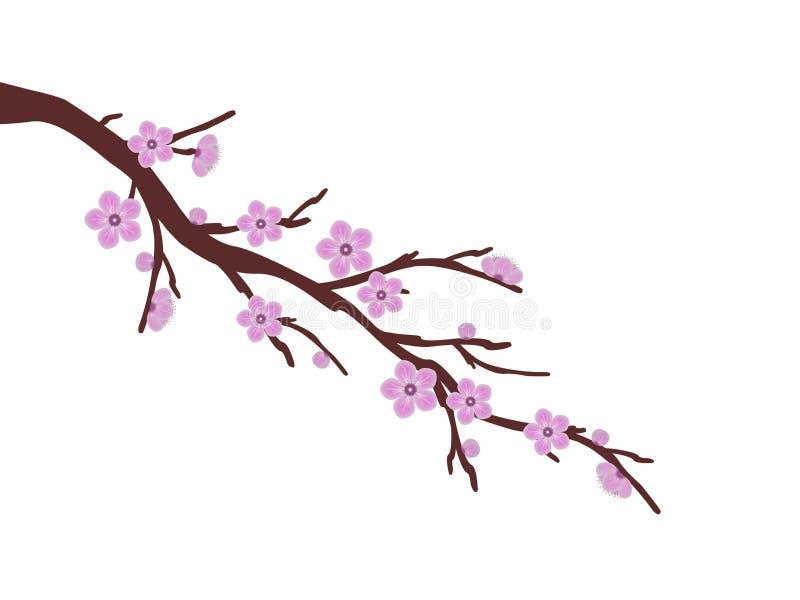 Rosa Kirschblüte-Kirschblüten-Niederlassungsfrühlingsillustrations-Weißhintergrund lizenzfreie abbildung