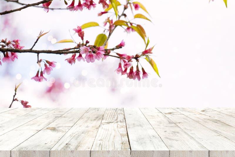Rosa Kirschblütenblume Kirschblüte auf Jahreszeit des Himmelhintergrundes im Frühjahr lizenzfreie stockfotos