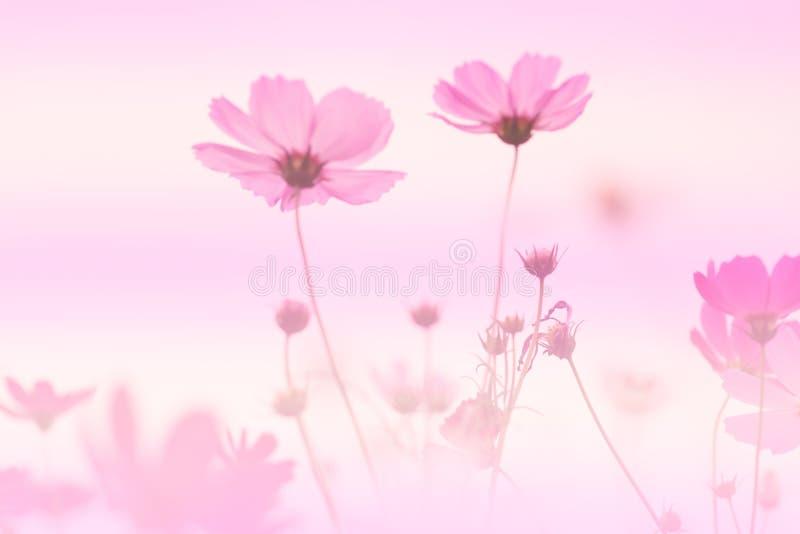 Rosa Kosmos- und Weichzeichnungshintergrund stockbild