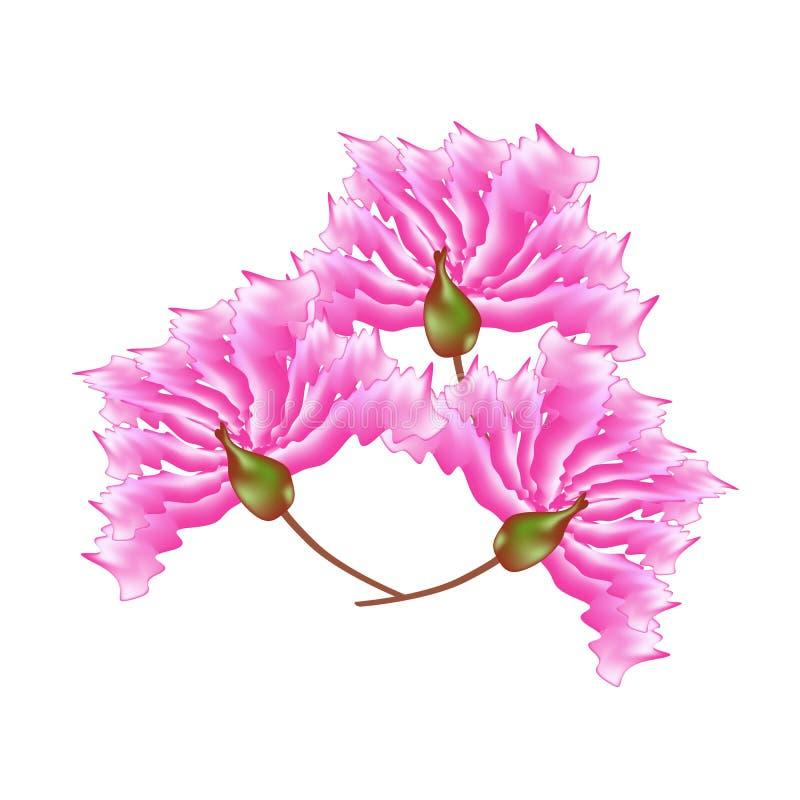 Rosa Krepp Myrtle Flowers auf weißem Hintergrund stock abbildung