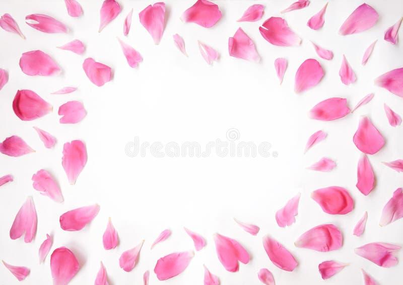 Rosa kronblad av pionen blommar att ligga på en vit bakgrund fotografering för bildbyråer