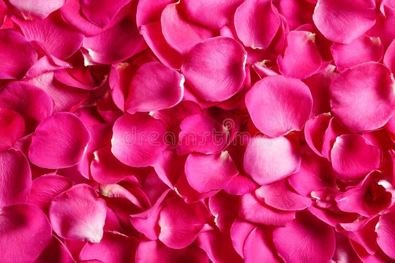 Rosa kronblad, bästa sikt vektor för detaljerad teckning för bakgrund blom- arkivbild