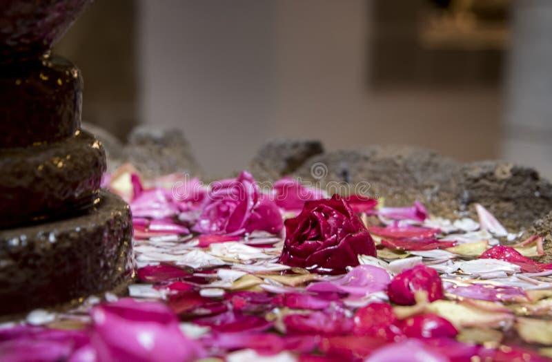 Rosa kronblad & blommor svävar i en springbrunnhandfat arkivbild