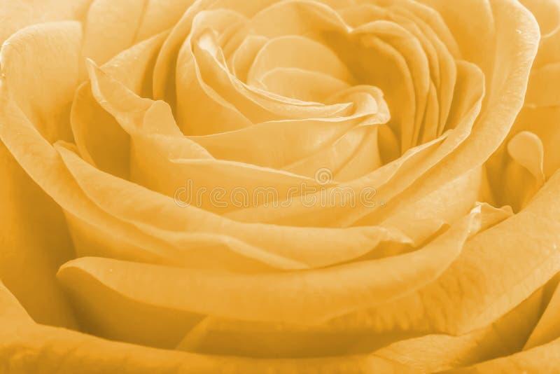 Rosa kronblad för lax som bakgrund arkivbilder