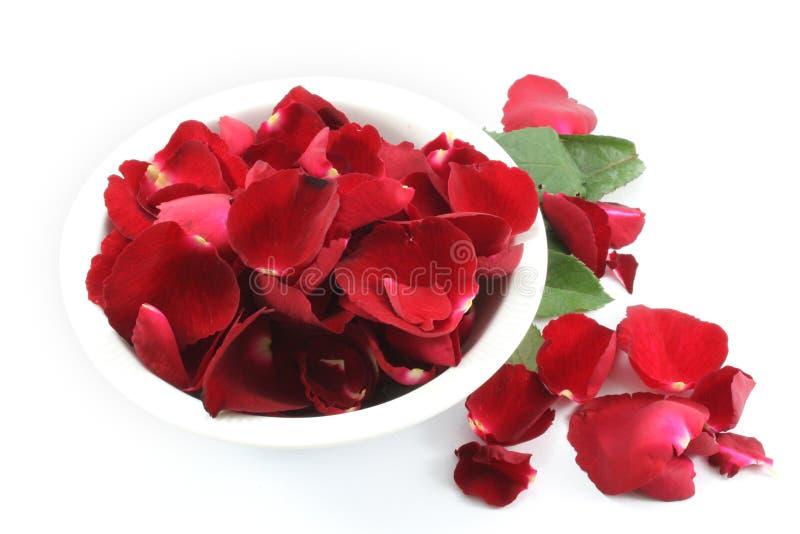 Rosa kronblad i det vita slaget som isoleras på vit bakgrund royaltyfri foto