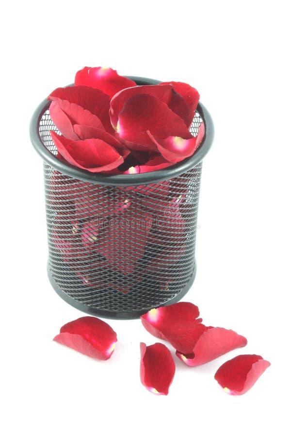 Rosa kronblad i korgen som isoleras på vit bakgrund royaltyfria foton