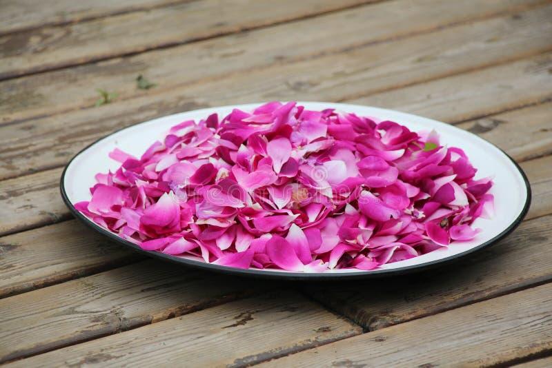 Rosa kronblad på plattan arkivbilder