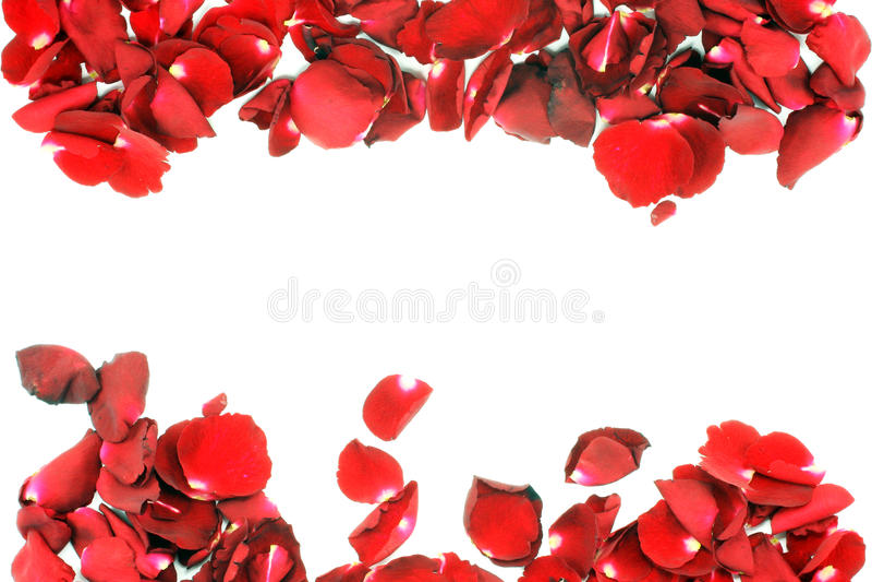 Rosa kronblad som isoleras på vit bakgrund royaltyfri fotografi