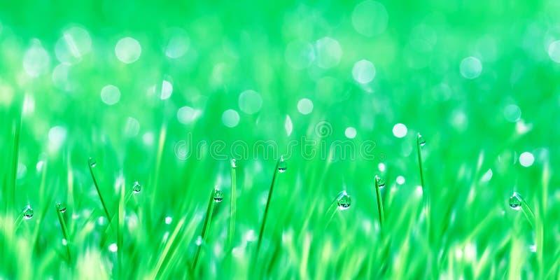 Rosa krople na zieleniej? czu?ej trawy Lato plamy świeży tło fotografia royalty free