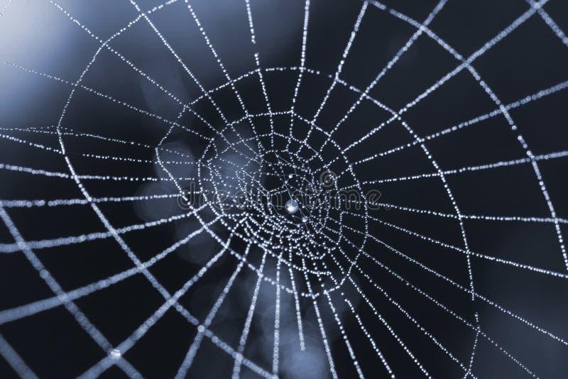 rosa kropli pająka sieci fotografia stock