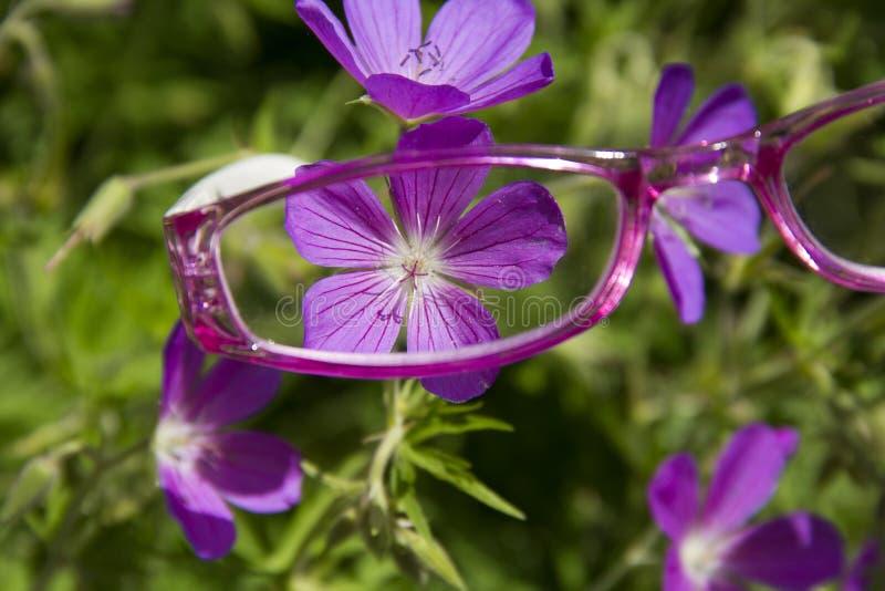 Rosa läs- exponeringsglas som beskådar blomman arkivfoton