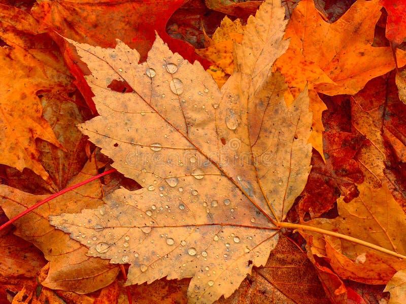 rosa liść zdjęcie royalty free