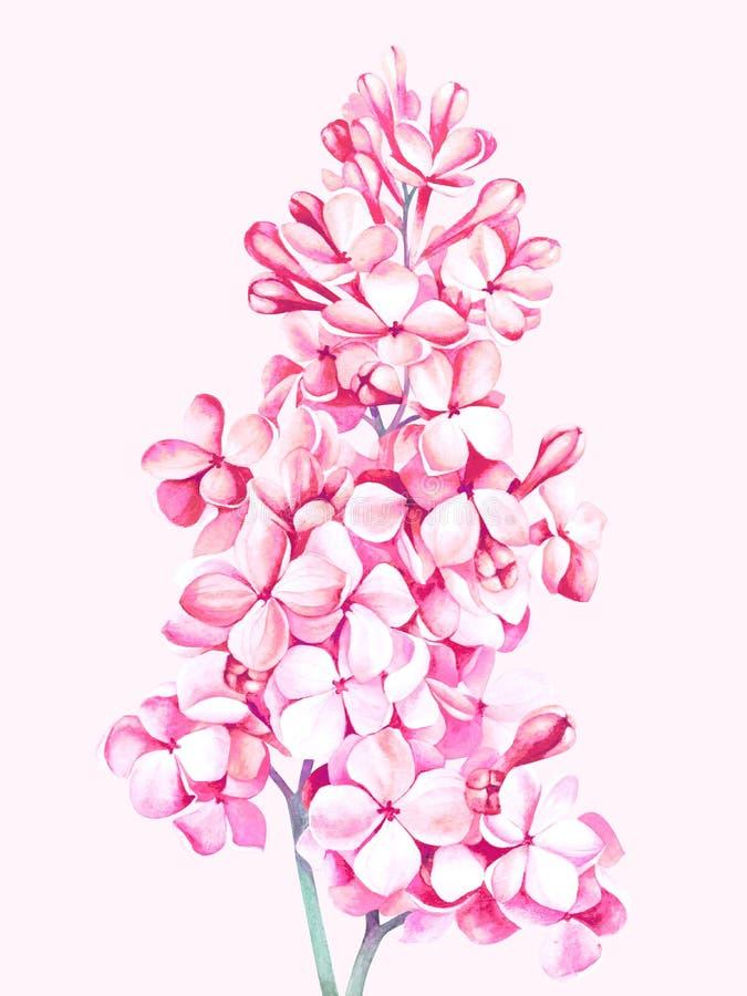 Rosa lila Blüte lokalisiert auf rosa Hintergrund Dekoratives Bild einer Flugwesenschwalbe ein Blatt Papier in seinem Schnabel lizenzfreie abbildung