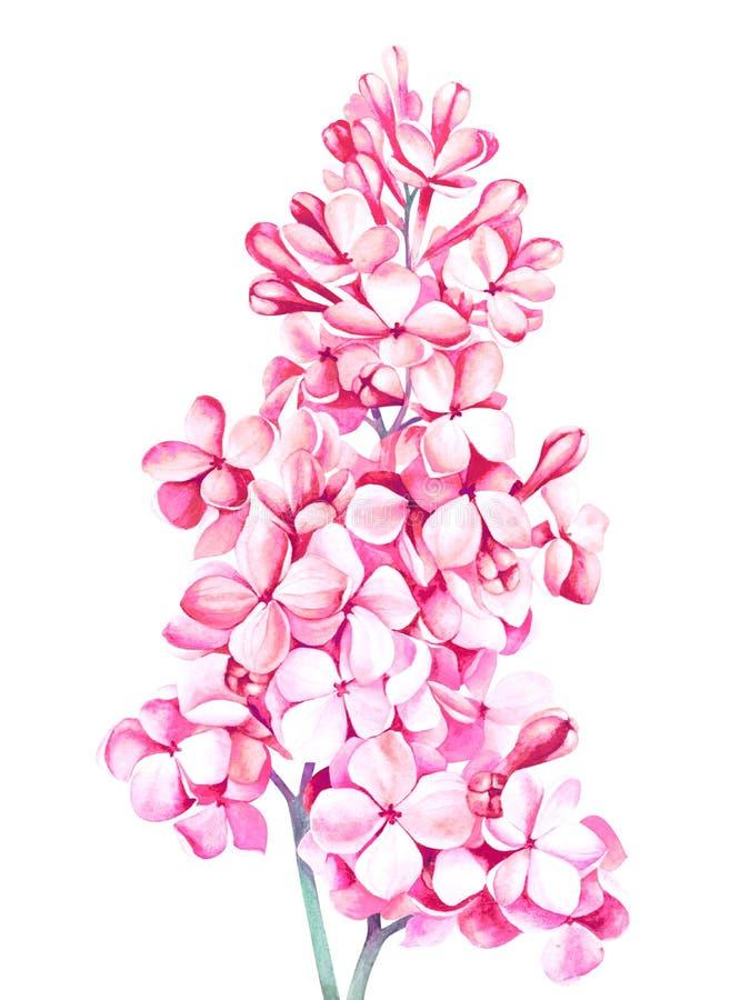 Rosa lila Blüte lokalisiert auf weißem Hintergrund Dekoratives Bild einer Flugwesenschwalbe ein Blatt Papier in seinem Schnabel vektor abbildung