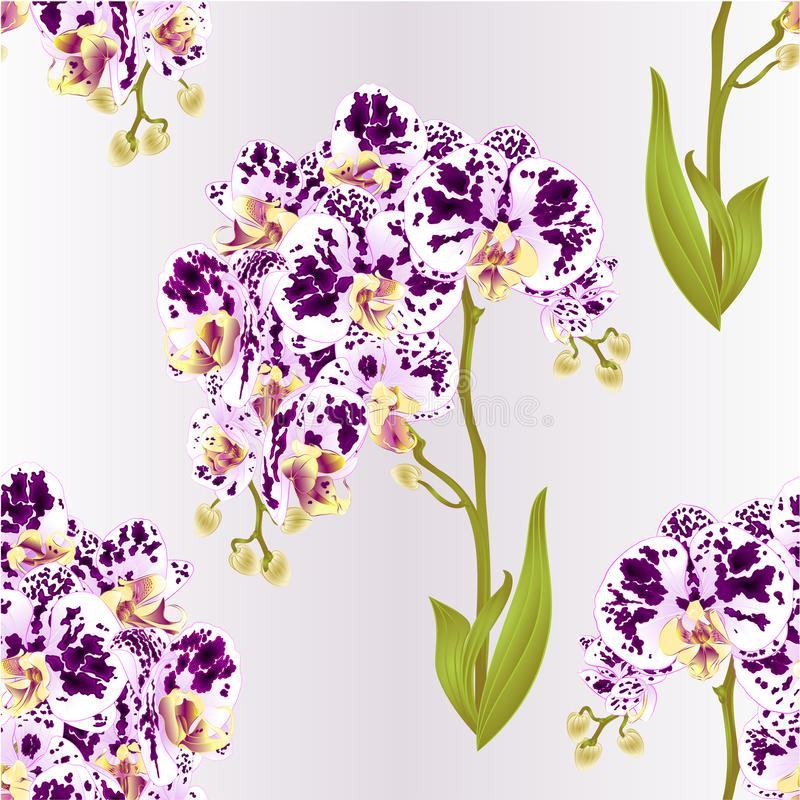 Rosa Lily Lilium, die candidum sind, Blume mit Blättern und Knospe auf einem weißen Hintergrund stellten Vektorillustration mit z vektor abbildung