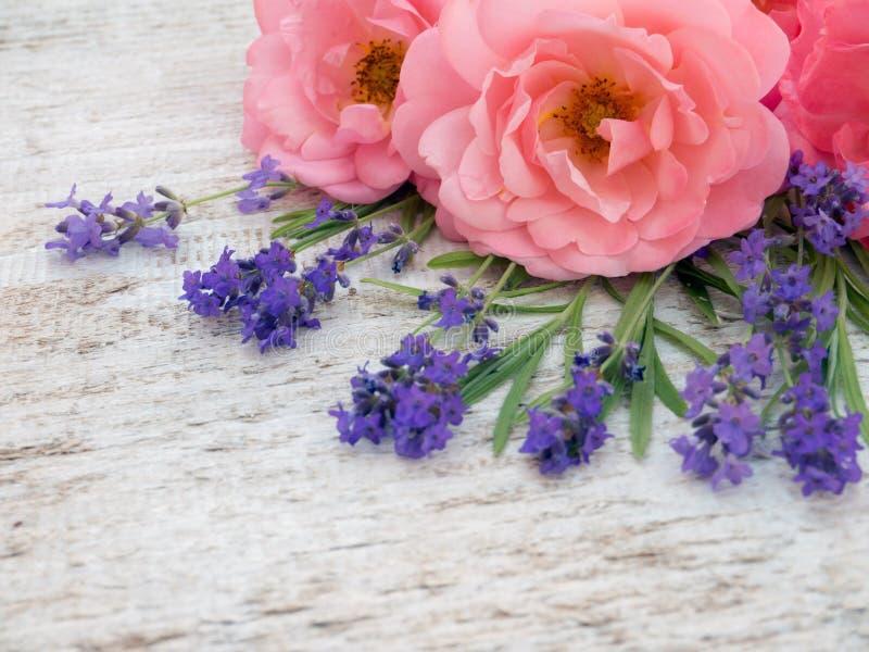 Rosa lockiga öppna rosor och provence lavendelbukett i cornen royaltyfria foton