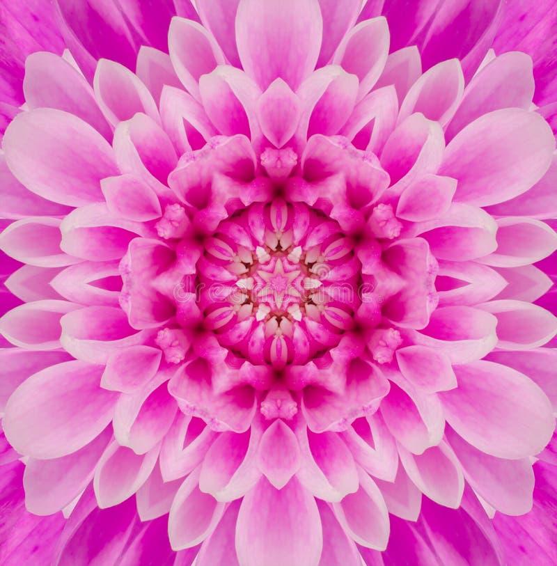 Rosa Mandala Concentric Flower Center Kaleidoscope royaltyfri fotografi