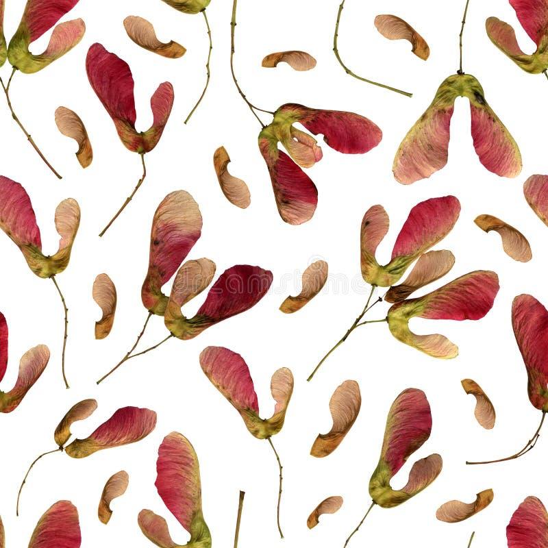 Rosa Maple Sseed Seamless Pattern arkivbild