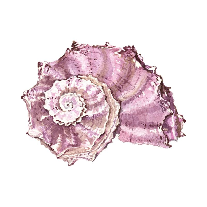 Rosa marino de la cáscara foto de archivo