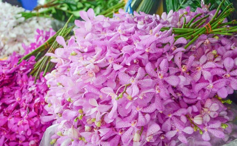 Rosa mini- orkidér fotografering för bildbyråer