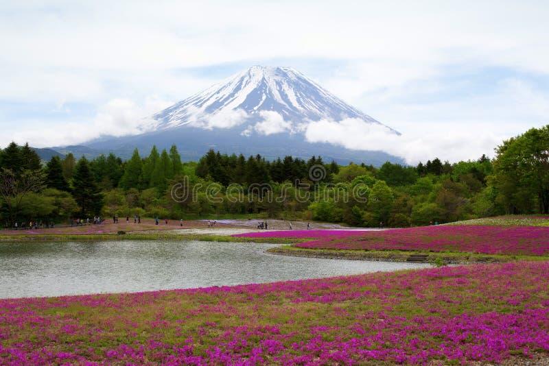 Rosa mossa på Mt fuji royaltyfri fotografi