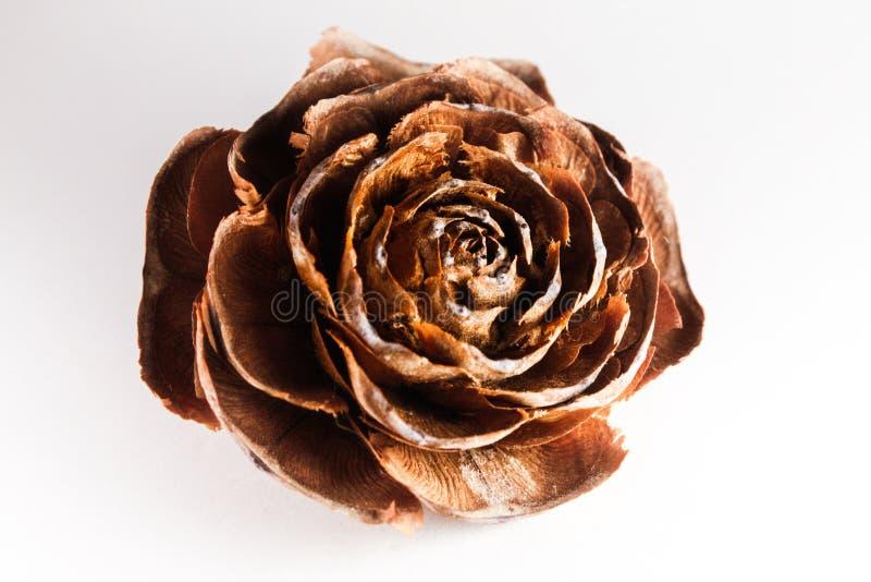 Rosa-muerta stockbilder