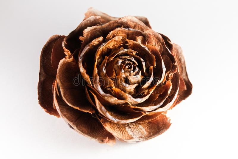 Rosa muerta stock images