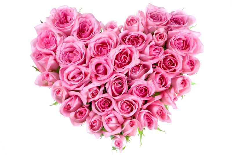 Rosa na forma do amor fotografia de stock