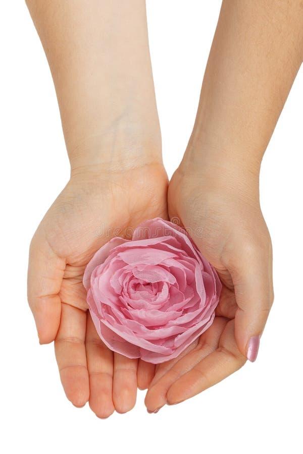 Rosa nas mãos fêmeas fotografia de stock