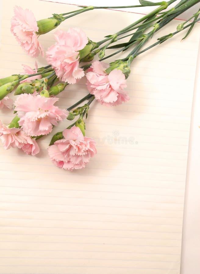 Rosa nejlika med papper royaltyfri fotografi