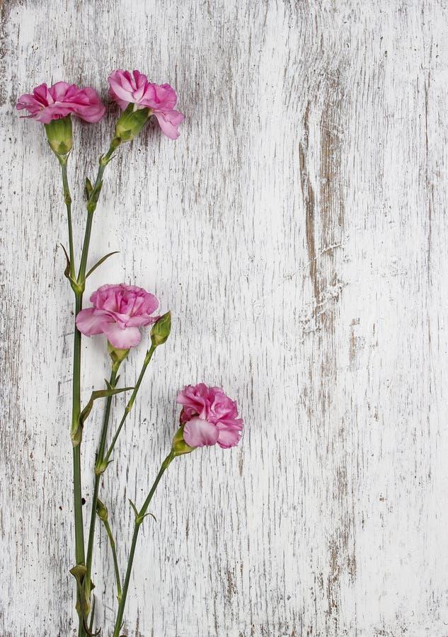 Rosa nejlika på träbakgrund fotografering för bildbyråer