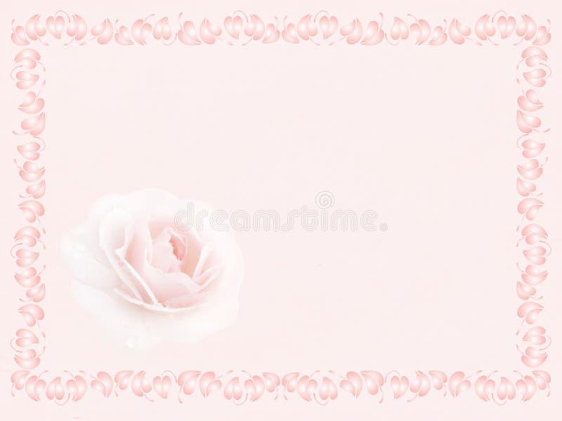 Rosa nel telaio immagine stock libera da diritti