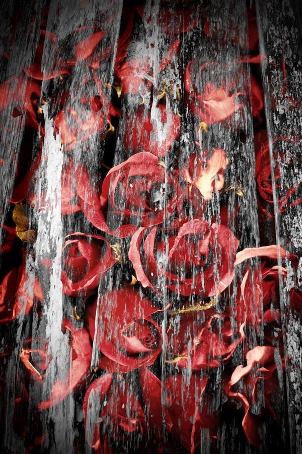 Rosa nello stile dell'annata immagine stock