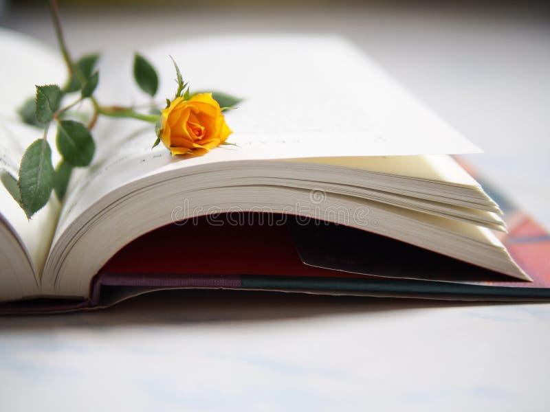 Rosa no livro imagem de stock
