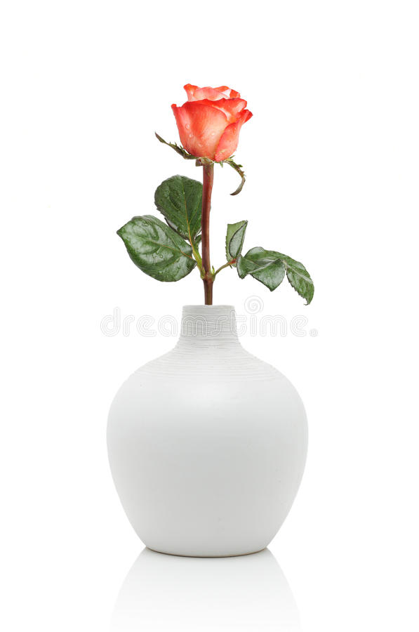 Rosa no vaso branco imagem de stock