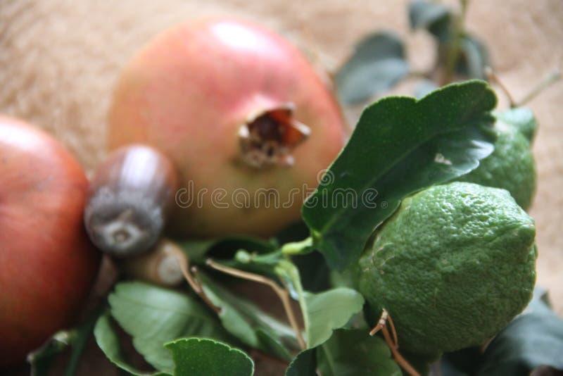 Rosa och grön höst royaltyfria bilder
