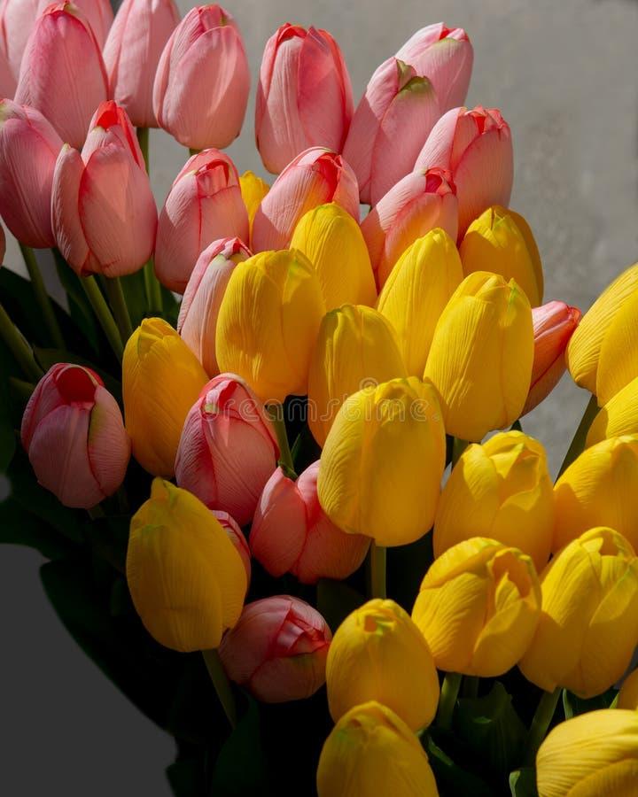 Rosa och gul tulpanbakgrund arkivbild